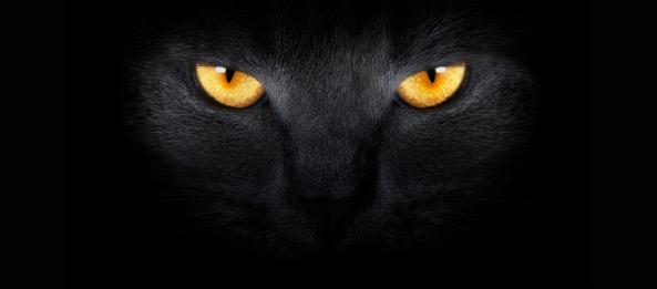 Die Schwarze Katze – Glück-, oder Unglücksbringer?