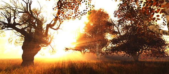Keltisches Baumhoroskop – Kiefer