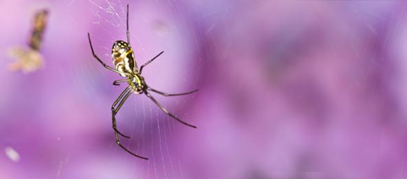 Traumdeutung – Spinne, Spinnennetz